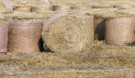 Cereal farming field Stock Image