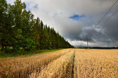 Cereal field against dark stormy Stock Image