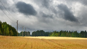 Cereal field against dark stormy Royalty Free Stock Images
