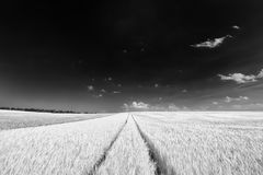 Endless tracks in a cereal field, black and white royalty free stock photography