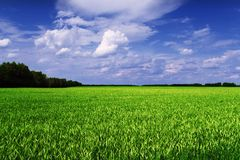 Cereal field scenic view Royalty Free Stock Photos