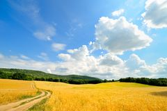 Cereal field in summer Stock Photos