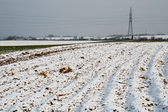 Cereal field under snow Stock Photo