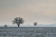 Cereal field under snow Stock Photography