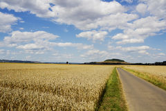 Cereal fields in Eifel, Rheinland-Pfalz, Germany Stock Image