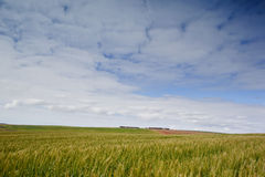 Cereal fields Royalty Free Stock Images