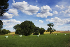 cereal fields with hay bales Vulkaneifel,Rheinland-Pfalz, Germany Stock Photos