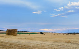Cereal fields Royalty Free Stock Photography