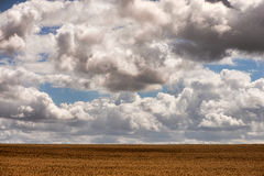 Cereal fields under blue sky Royalty Free Stock Image