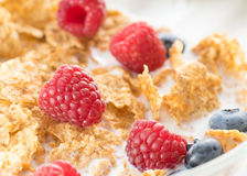 Cereal flakes with fresh raspberry Stock Image