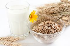 Cereal flakes and a glass of milk. Ripe ears of wheat stock photo