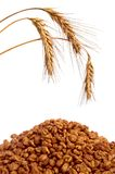 Cereal flakes and wheat Stock Images