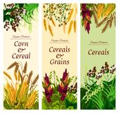 Cereal, grain and vegetable banner of healthy food. Cereal, grain and vegetable banner of natural healthy food template. Wheat, rice and barley, rye, oat and vector illustration