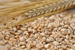 Cereal grains Stock Image