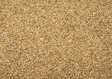 Cereal grains Stock Images