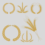 Cereal grains and ears Stock Photos