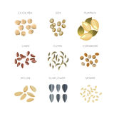 Cereal grains flat vector icons set. Chick-pea and linen, cumin and coriander, melon and sesame illustration Stock Photography