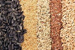 Cereal Grains and Seeds Stock Photos