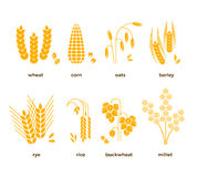 Cereal grains vector icons. rice, wheat, corn, oats, rye, barley Stock Photography
