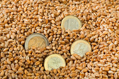 Cereal grains of wheat Stock Photos