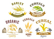 Cereal icon set with wheat, rye, oat and millet. Wheat, rye, oat and millet icon set. Organic farm cereal plant and ear with ripe grains, decorated by ribbon Stock Photography