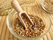 Cereal mixture Royalty Free Stock Images