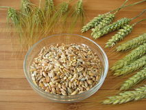 Cereal mixture and grain ears Stock Images