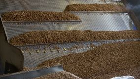 Cereal Oatmeal Crumbles Into Equal Shares In A Factory. Grains move along the conveyor belt to be cleaned and dried before grinding in a mill stock footage