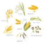 Cereal Plants With Names Set Stock Photography