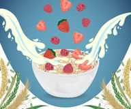 Cereal porridge in bowl with milk splashes, raspberry, strawberry and cereals. Royalty Free Stock Photography