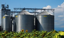 Cereal silos in front of sunflowers field Royalty Free Stock Photography