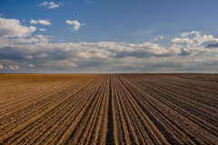 Cereal spring field Royalty Free Stock Images