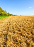 Cereal stubble field on a sunny day in the summer season Royalty Free Stock Photo