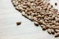 Cereal from sunflower seed Royalty Free Stock Photos