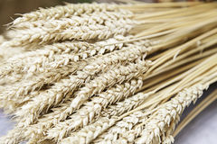 Cereal wheat Royalty Free Stock Images