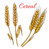 Cereal wheat and rye ears isolated vector icon Royalty Free Stock Image