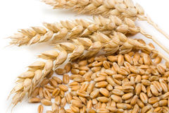 Cereal and wheat spike. On bright background Stock Image