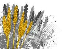 Cereale illustrazione vettoriale