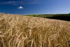 Cereale #3 Immagini Stock Libere da Diritti