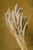 Cereale 3 Fotografie Stock Libere da Diritti