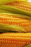 Cereale Fotografia Stock Libera da Diritti