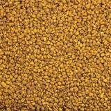 Cereale arrostito Fotografia Stock Libera da Diritti