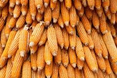 Cereale asciutto Fotografia Stock