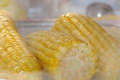 Cereale bollito Immagini Stock