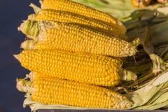 Cereale, bollito Fotografia Stock Libera da Diritti