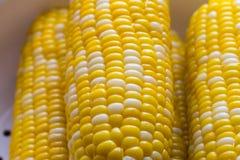 Cereale bollito in primo piano Fotografie Stock Libere da Diritti