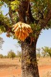 Cereale, Burkina Faso Fotografia Stock Libera da Diritti