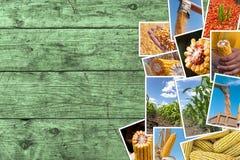 Cereale che coltiva in collage della foto di agricoltura con lo spazio della copia Fotografia Stock