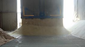 Cereale che scarica nell'elevatore di grano archivi video
