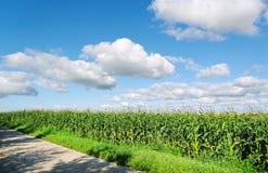 Cereale crescente. Immagini Stock